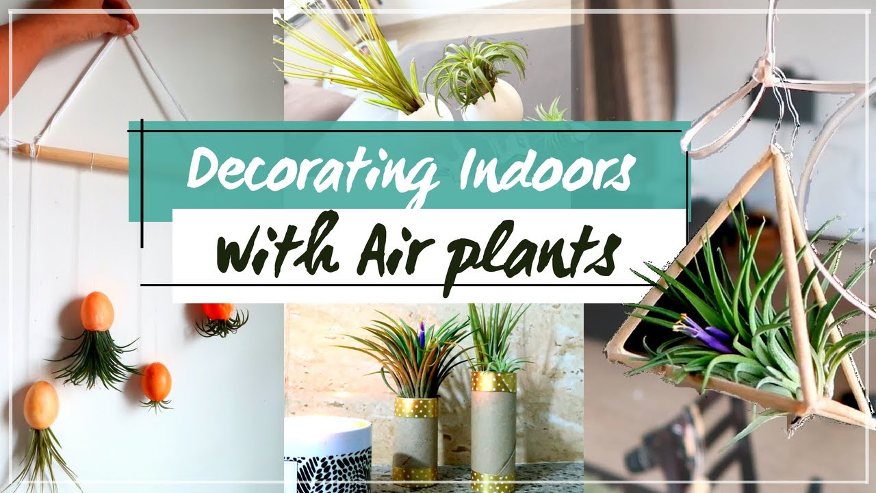 Diy Air Plant Decoration For Small Spaces Youtube