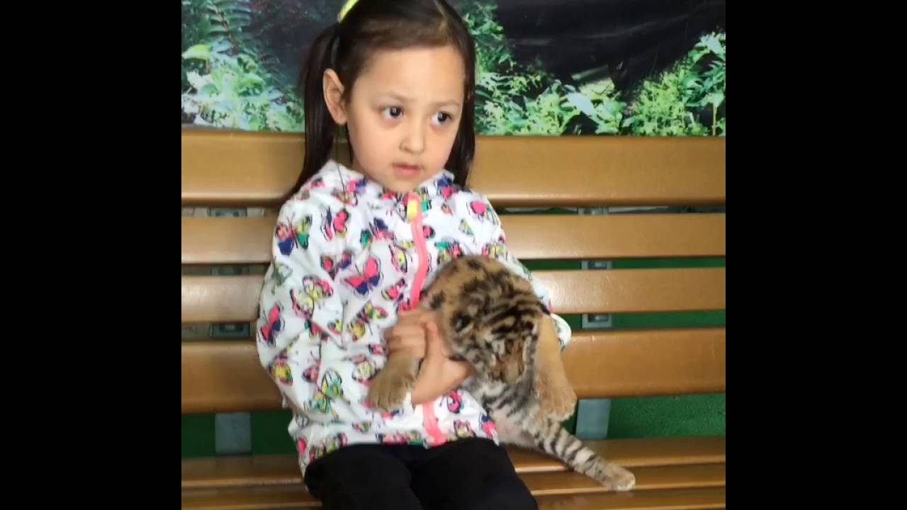 mexican chinese mix race baby girl with baby tiger youtube