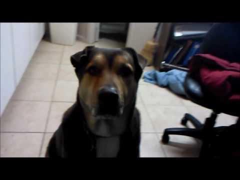 The SMARTEST DOG in ODESSA TEXAS