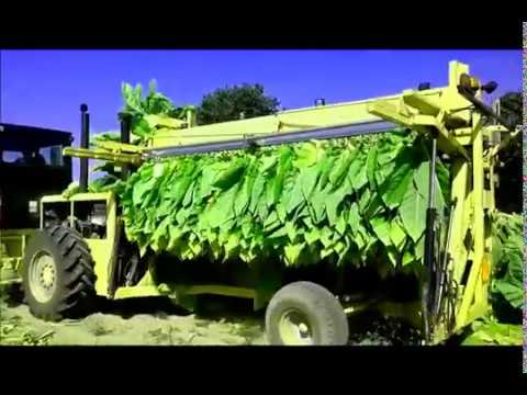 TOP 10 Tobacco Harvesting Automatically