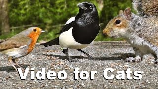 Video for Cats to Watch - Birds and Squirrels on The Woodland Path
