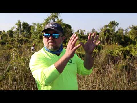 Video: SFWMD attacking exotic plants smothering Everglades