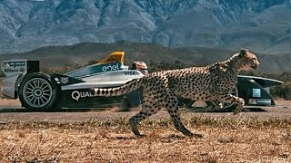 10 Animals Faster Than Cars
