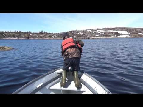 Safe Harbour Trip