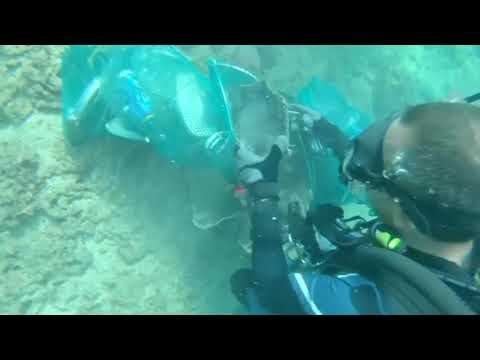 Tonnes of underwater waste picked up by divers in Lebanon