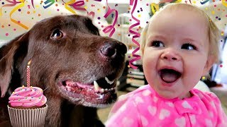 One of J House Vlogs's most viewed videos: 1st BIRTHDAY DOG SURPRISE