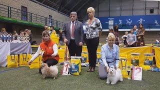 ЮНИОРЫ-3. Выставка собак LKBA CACIB «Планета собак 2016»