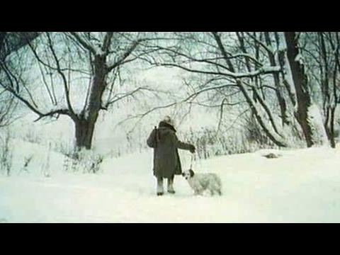 Белый Бим Чёрное ухо, Гавриил Троепольский #5 аудиокнига онлайн с картинками