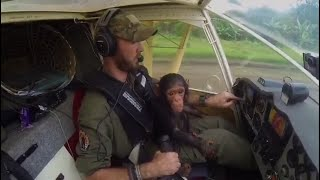 Rescued Chimp Helps Out on Flight over Africa thumbnail