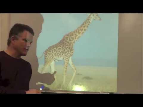 Speed Drawing Mammals