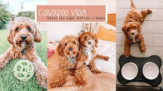 Day In The Life Of My Two Cavapoo Puppies | Archie & Alfred The Cavapoo