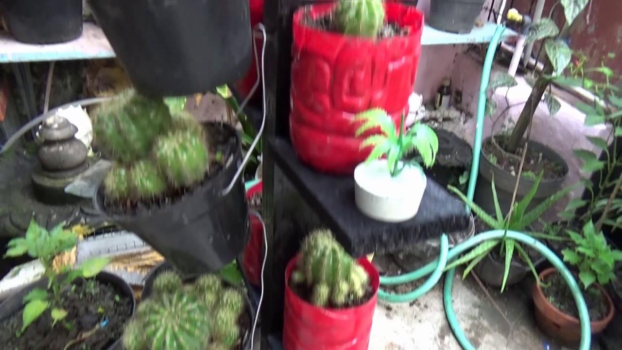 Rak Kaktus Tanaman