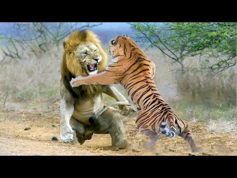 15 Most Aggressive Animals On The Planet