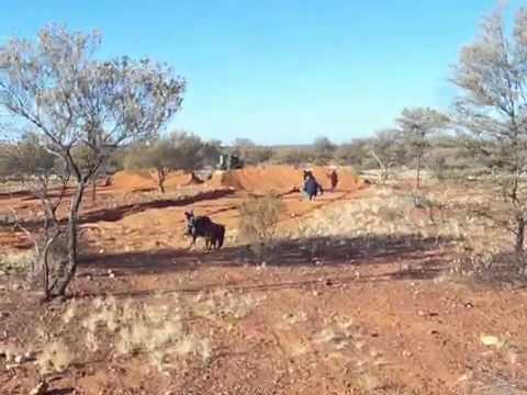 Small Scale Gold Mining WA, Australia ( Doze And Detect )