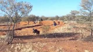 Small scale gold mining WA, Australia ( doze and detect )