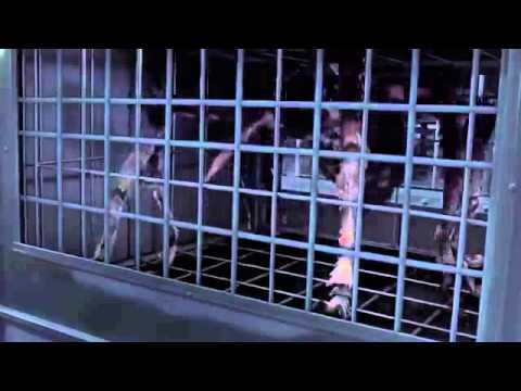 Spiders 3D 2013   HD Patrick Muldoon, Christa Campbell