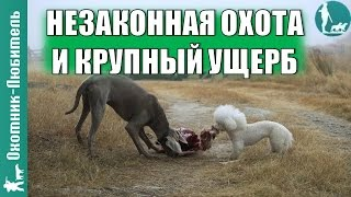 Незаконная охота и крупный ущерб в России!