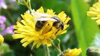 Детям о животных - Пчёлы - От слона до муравья (Выпуск 26)