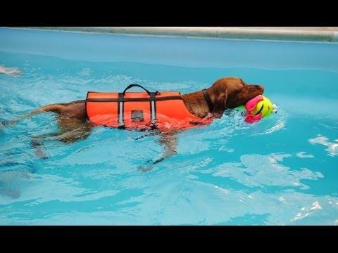 Как плавают собаки видео