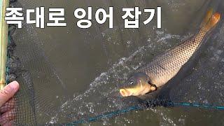 (물고기잡기) 족대로 잉어 잡아 압력밥솥으로 잉어찜 만…