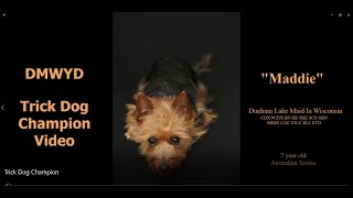 Maddie  first Australian Terrier Trick Dog Champion