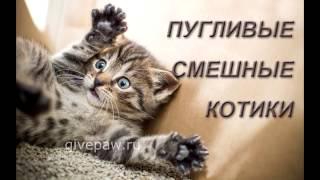 Смешные пугливые котики: прикольные животные - Funny cats: amusing animals