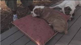 Dog Supplies : How To Buy A Dog Bed