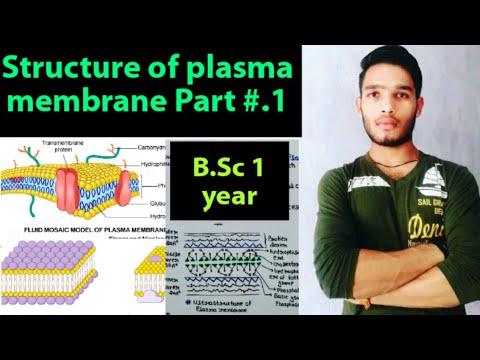 Structure Of Plasma Membrane / Fluid Mosaic Model Of Plasma Membrane