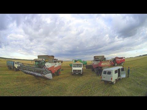 Технология возделывания сафлора в Ростовской области