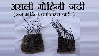 Mohini - Vashikaran Jadi - Asali  मोहिनी - राज मोहिनी जड़ी जानकारी +919826264966