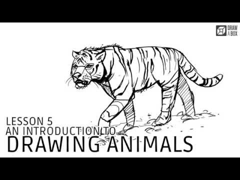 Lesson 5: An Introduction to Drawing Animals