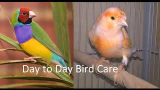 How to take care of Gouldian finches and Canaries. Day to Day Care. Part 6