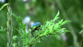 nnnnvad,бабочки,секс у жуков.m2ts ,тест Canon Legria HF S20 ,