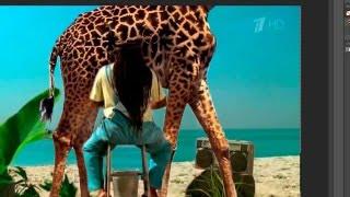 Правильная реклама конфет Скитлз с жирафом(, 2016-02-29T16:44:46.000Z)