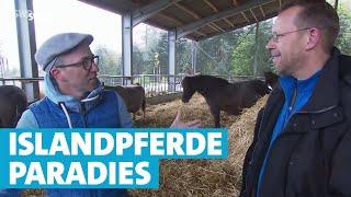 Islandpferde-Paradies
