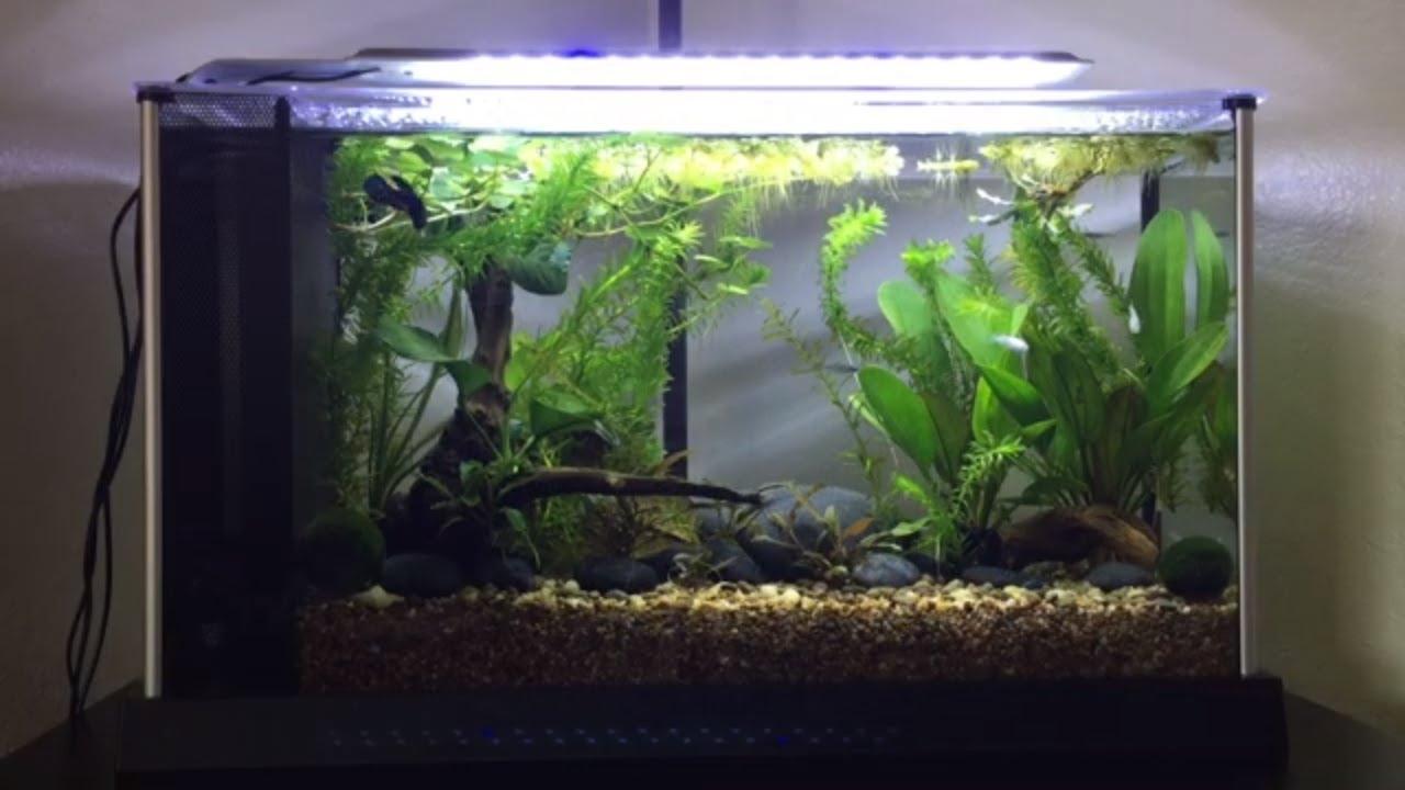 Fluval Spec 5 Gallon Freshwater Tank Fish Stock Aquascape Youtube