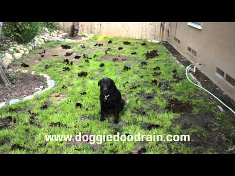 Dog Poop Clean up Solution<a href='/yt-w/JzOUM05Vd-A/dog-poop-clean-up-solution.html' target='_blank' title='Play' onclick='reloadPage();'>   <span class='button' style='color: #fff'> Watch Video</a></span>