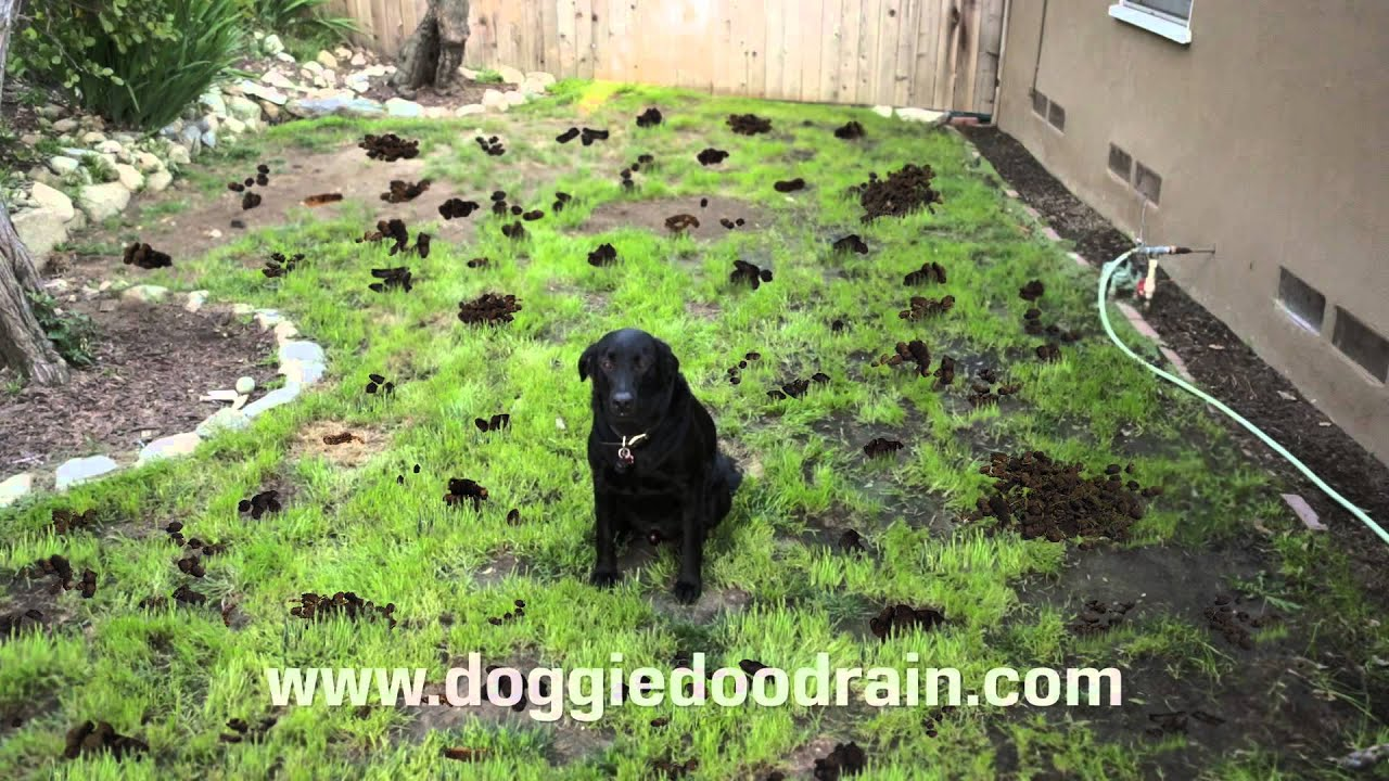 Dog Poop Clean up Solution - YouTube