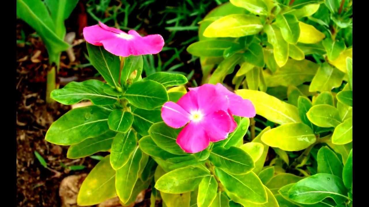 Tipos de flores youtube - Todo tipo de plantas con sus nombres ...