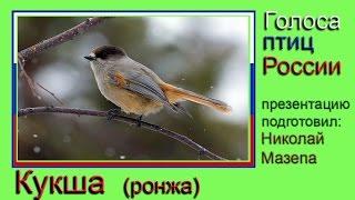 Кукша. Голоса птиц России