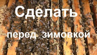 Последние штрихи пчеловода перед зимовкой пчел