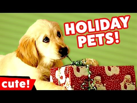 Funniest Holiday Pet Clips, Bloopers & Moments Caught On Tape December 2016 | Kyoot Animals
