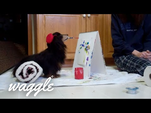 Best Pets Ever 4 |  Cutest and Funniest Pet Clips of the Week