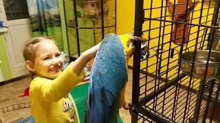 Попугай ара знакомится с вольером