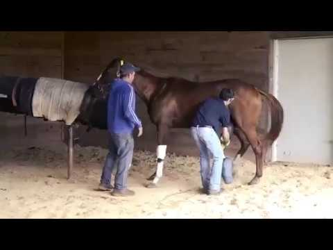 How To Assist A Stallion's Ejaculation Using AV, Horse Penis HD from YouTube · Duration:  2 minutes 7 seconds