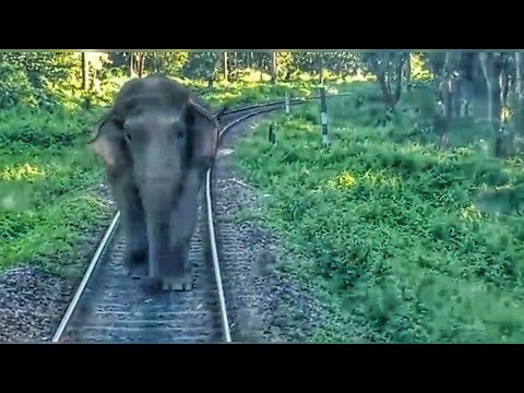 Elephant attacks Passenger Train