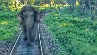 Elephant attacks Passenger Train