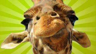 Смешные африканские животные