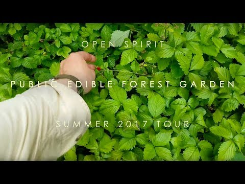 Open Spirit Edible Forest Garden summer 2017 garden tour