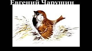 Воробей    Евгений Чарушин читает Павел Беседин